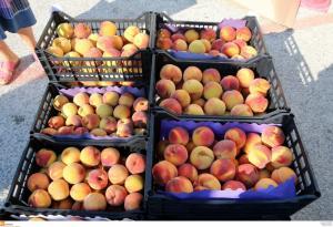 Δέσμευση φρούτων αγνώστου προελεύσεως στου Ρέντη