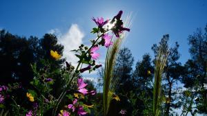 Θερινό ηλιοστάσιο: Tην Πέμπτη η μεγαλύτερη μέρα του έτους