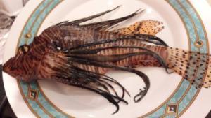 Κρήτη: Το ψάρι που έβαλε στο πιάτο δεν ήταν σκορπίνα όπως πίστεψε αρχικά – Πολύχρωμο και εξαιρετικά επικίνδυνο [pics]