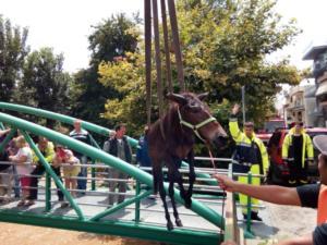 Βόλος: Είχαν δέσει τα άλογα μέσα στο χείμαρρο! Σώθηκαν στο τσακ!