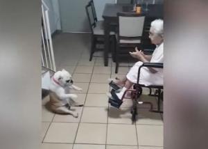 Σκύλος και γιαγιά σε τρελά κέφια! Χορεύουν και τραγουδούν!