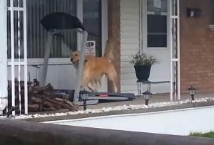 Σκύλος με διάδρομο γυμναστικής κάνει τον γύρο του διαδικτύου!