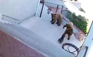 Θαρραλέος σκύλος τα έβαλε με δύο αρκούδες!