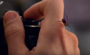 Πώς εκπαιδεύονται τα έντομα για τις ταινίες