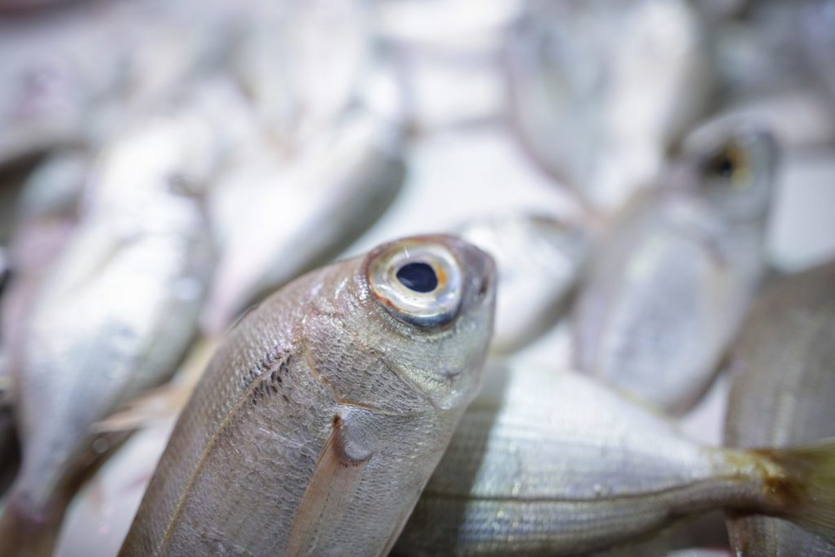 ψάρια Πειραιάς