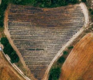 Κοζάνη: Γαμπρός και νύφη στο πιο ιδιαίτερο χωράφι – Το drone δεν άφησε τίποτα κρυφό [pics]