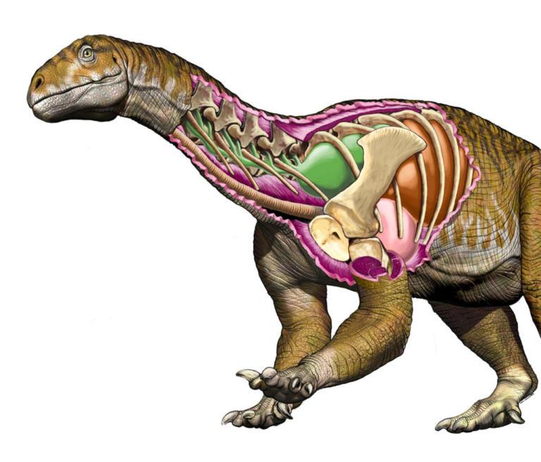 Αργεντινή: Ανακαλύφθηκε γιγαντιαίος δεινόσαυρος ηλικίας άνω των 200 εκατομμυρίων ετών