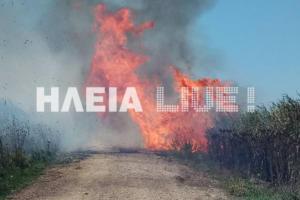 Ηλεία: Μεγάλη φωτιά στη Σπιάντζα πλησίασε σπίτια – Πυροσβέστες απέτρεψαν τα χειρότερα [pics]