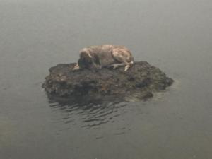 Ο σκυλάκος της τραγωδίας βρήκε τους δικούς του ανθρώπους