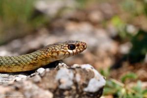 Καστοριά: Εικόνες άγριας φύσης δίπλα στην διάσημη λίμνη – 19 φωτογράφοι στην περιοχή [pics]