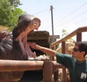 """""""Έφυγε"""" η Τάμι, ο γηραιότερος ιπποπόταμος στον κόσμο! – video"""