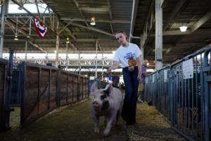 Τα γουρούνια περισσότερα από τους ανθρώπους στην Ισπανία!