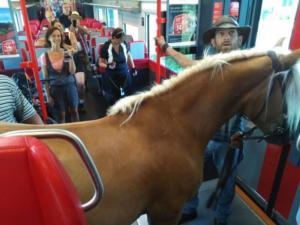 Μπήκε χαλαρός στο τρένο παρέα με… το άλογό του! [pics]