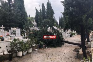 Οργή… καιρού στη Λαμία! Έπεσαν κυπαρίσσια στο νεκροταφείο [pics]