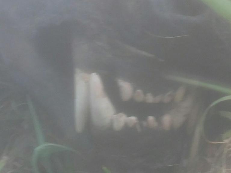 Νεκρή αρκούδα εντοπίστηκε στο Βροντερό Φλώρινας – Προσοχή, σκληρές εικόνες