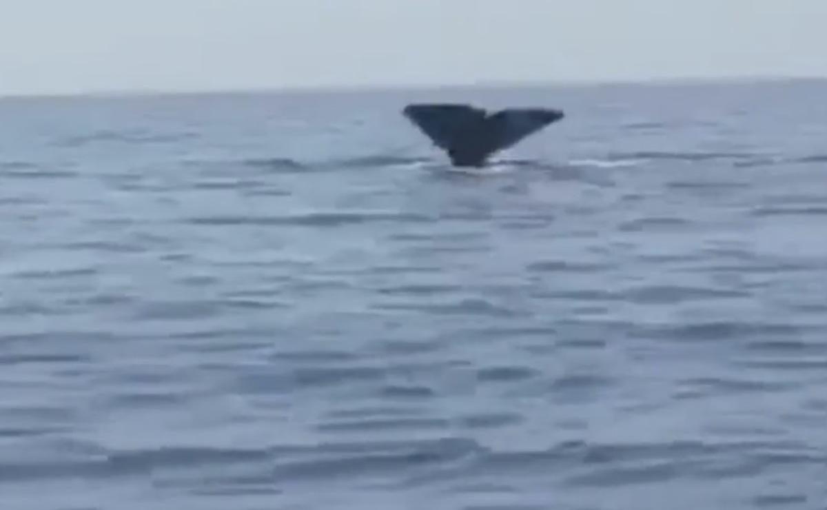 Φάλαινα στα Σφακιά! Θαρραλέος κολυμβητής βούτηξε δίπλα της! – video