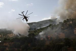 Έβρος: Φωτιά σε δασική έκταση στην Αλεξανδρούπολη