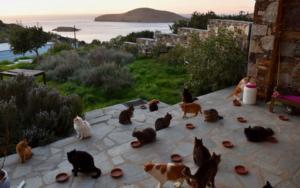Time: Η δουλειά των ονείρων σου σε πανέμορφο ελληνικό νησί!