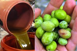 Τι αλλάζει για το παρθένο ελαιόλαδο και τις επιτραπέζιες ελιές