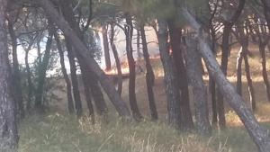 Μυτιλήνη: Φωτιά στα Τσαμάκια [pics]