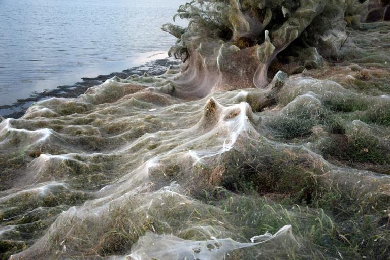 Αιτωλικό: Απίστευτες εικόνες στην παραλία – Το πέπλο που έφτιαξαν αράχνες κάλυψε τα πάντα [pics]