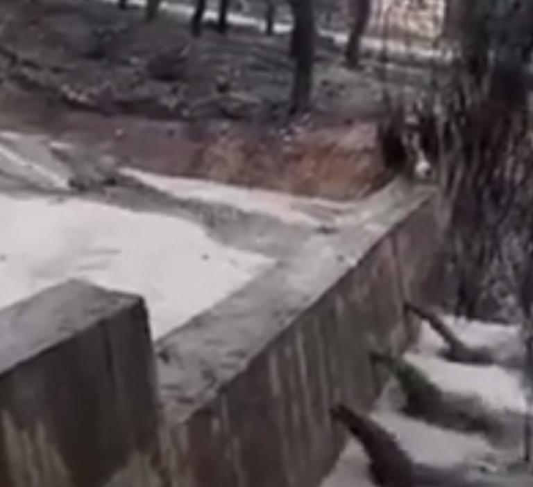 Αγωνία στο Μάτι! Μετά τη φονική φωτιά οι κάτοικοι τρέμουν τα φουσκωμένα ρέματα – video