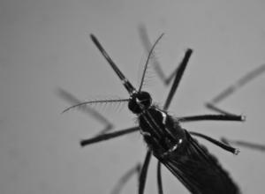 Συναγερμός για ασθένειες που μεταδίδονται στον άνθρωπο από τα κουνούπια – Αυτά συμβουλεύουν οι ειδικοί
