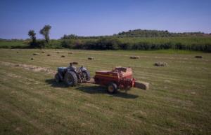 ΕΛΓΑ: Την Τετάρτη… πληρώνει 38,5 εκατ. ευρώ σε αγρότες και κτηνοτρόφους!
