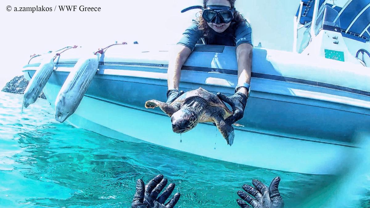 Τραυματισμένη θαλάσσια χελώνα διασώθηκε από εθελοντές [pics]