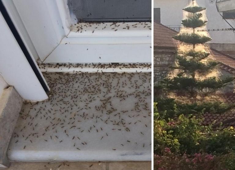Εικόνες ταινίας θρίλερ στο Αιτωλικό! Αράχνες και κουνούπια κύκλωσαν τα σπίτια!
