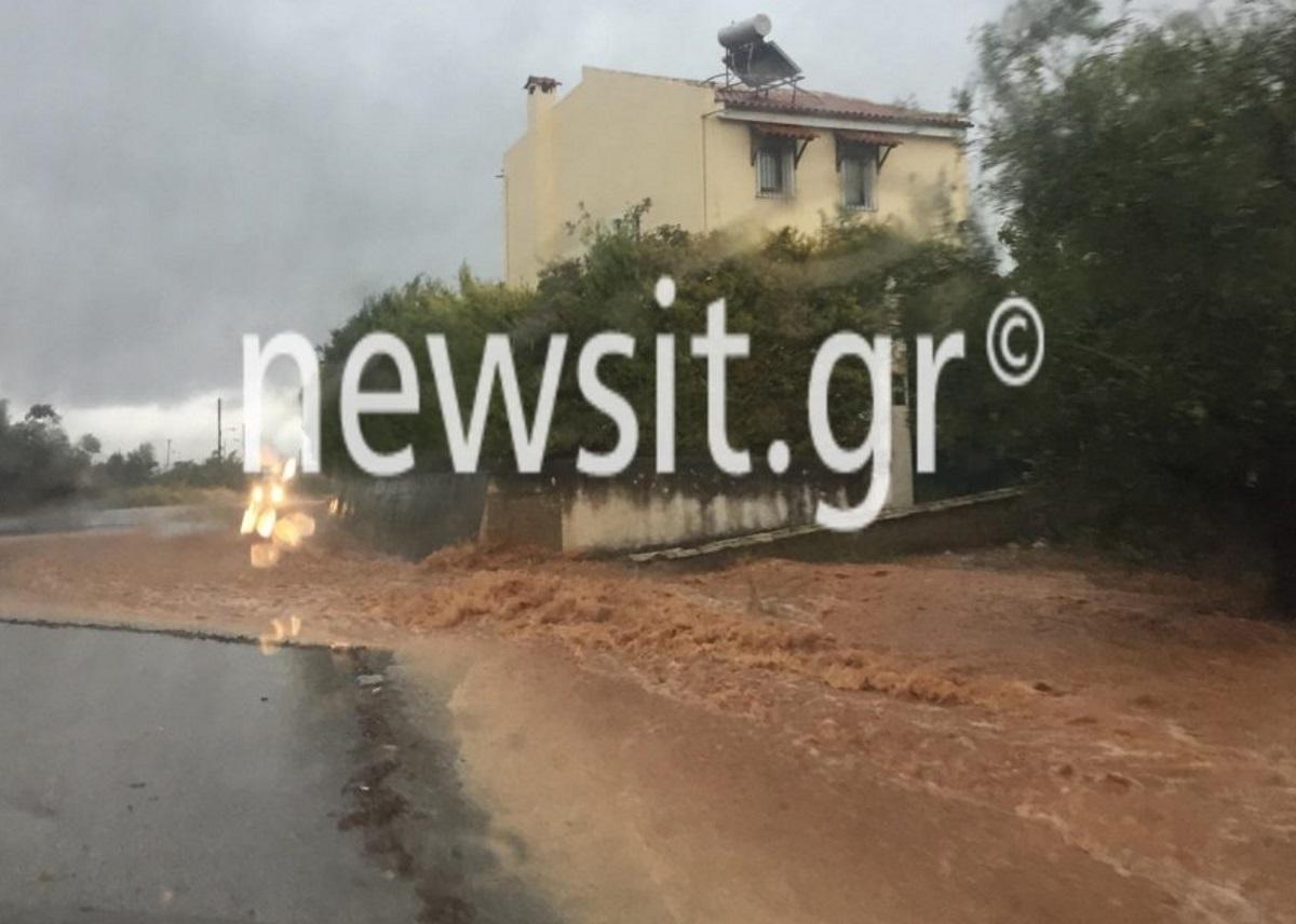 Αργολίδα: Σαρωτικές πλημμύρες στο Άργος – Χείμαρροι παρασύρουν αυτοκίνητα και μπαίνουν σε σπίτια – Εικόνες που κόβουν την ανάσα [pics, video]