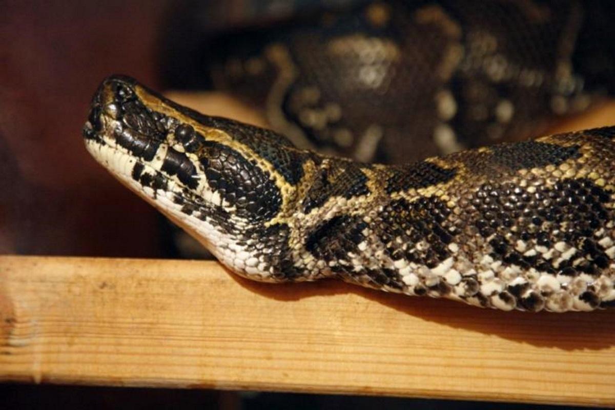 Τρίκαλα: Μητέρα είδε το φίδι να ανεβαίνει στο κρεβάτι του παιδιού της και απόρησε με τη δύναμη που βρήκε!