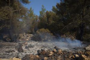 Φωτιές στη Δυτική Ελλάδα: Μάχη των πυροσβεστών σε τέσσερα μέτωπα