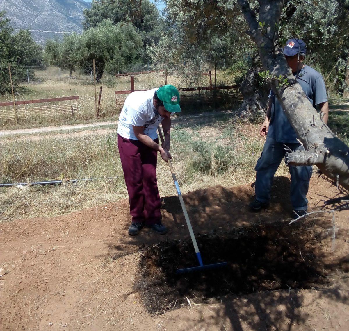 Ένας λαχανόκηπος στην Παιανία που… θεραπεύει