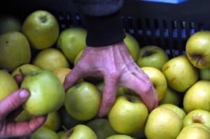 Πειραιάς: Εντοπίστηκαν αγνώστου ταυτότητας… μήλα και αχλάδια!