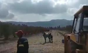 Κρήτη: Επιχείρηση διάσωσης για πουλάρι που έπεσε σε πηγάδι – video