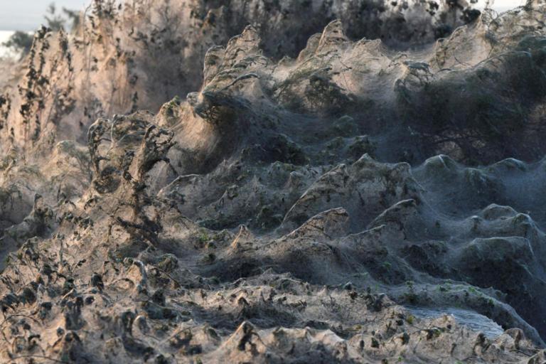 Συγκλονιστικές εικόνες από το πέπλο που έφτιαξαν αράχνες στη λίμνη Βιστωνίδα [pics]