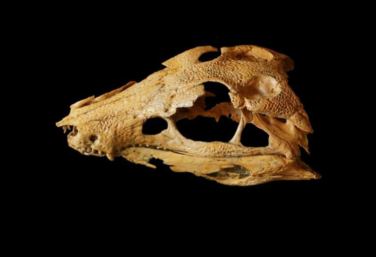 """Τεράστιο πουλί είχε φάει το """"αρχαιότερο"""" παιδί των Νεάντερταλ! Ιστορική ανακάλυψη"""