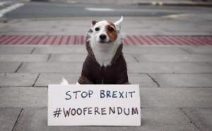 Οι σκύλοι διαδηλώνουν και… γαβγίζουν κατά του Brexit στο Λονδίνο! [video]