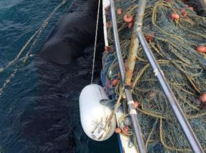 Ηλεία: Η θάλασσα έκρυβε εικόνες που δεν περίμενε κανείς – Το πανέμορφο άλογο που κολυμπούσε 15 μέρες – video