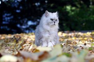 Ρωσική πόλη βρήκε υπεύθυνο φροντίδας για… τις γάτες