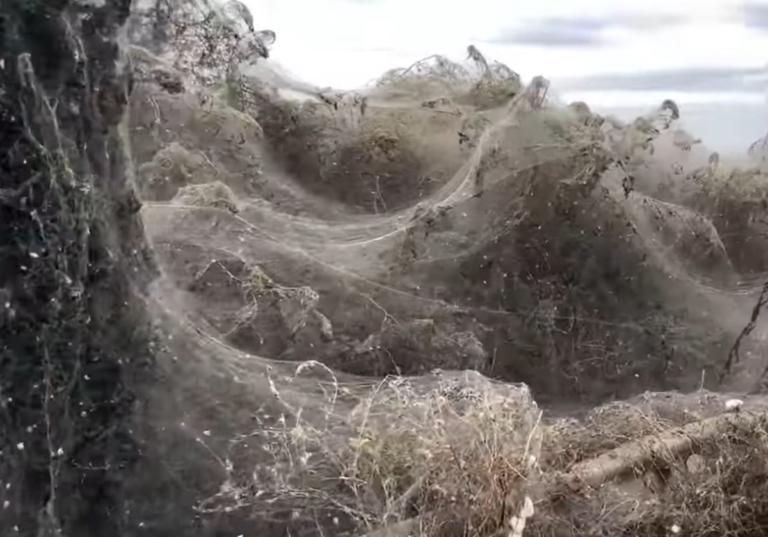 Ξάνθη: Αυτό είναι το ατελείωτο πέπλο που έφτιαξαν αράχνες στη λίμνη Βιστωνίδα – video
