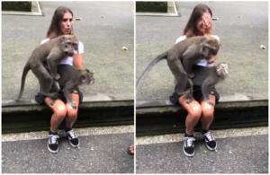 Μαϊμούδες… πορνοστάρ του δίνουν και καταλαβαίνει στα πόδια κοπέλας! video