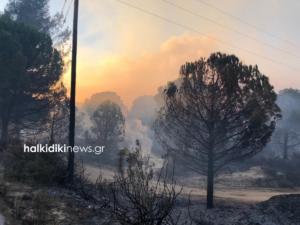 """Μάχη με τις φλόγες στη Χαλκιδική! Ο μανιασμένος αέρας """"απλώνει"""" τη φωτιά ανεξέλεγκτα [pics]"""