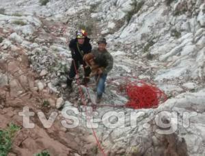 Ήρωες πυροσβέστες κατέβηκαν σε γκρεμό και έσωσαν εγκλωβισμένα κυνηγόσκυλα [pics]
