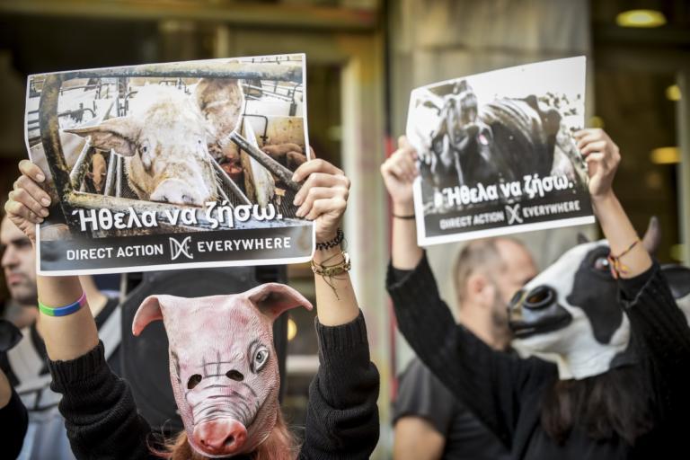 """Βαρβάκειος: """"Ντου"""" φιλόζωων! Ντυμένοι γουρούνια και αγελάδες [pics]"""