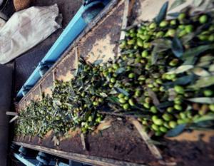 Λασίθι: Έπαθε ανακοπή μέσα στο λιοτρίβι…
