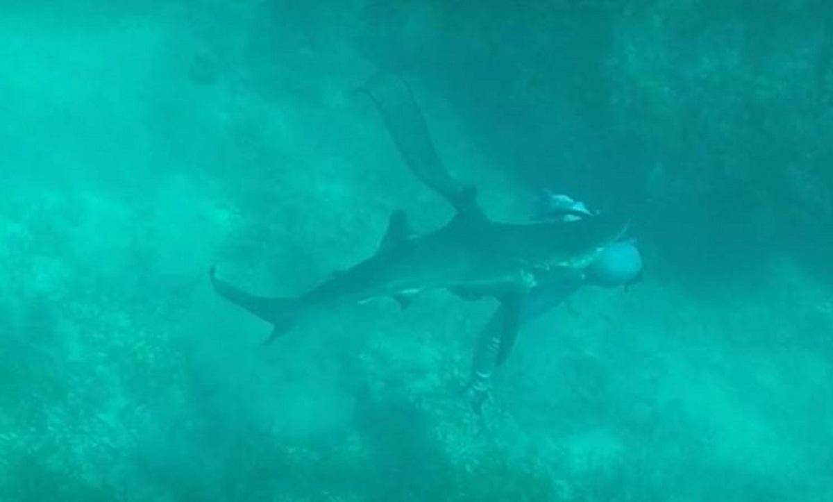 Καρχαρίας δαγκώνει ψαροντουφεκά στο κεφάλι! Video