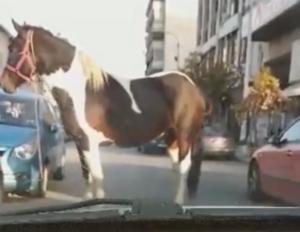 Θεσσαλονίκη: Οι οδηγοί είδαν μπροστά τους αυτή την εικόνα – Η εξήγηση για το άλογο – video