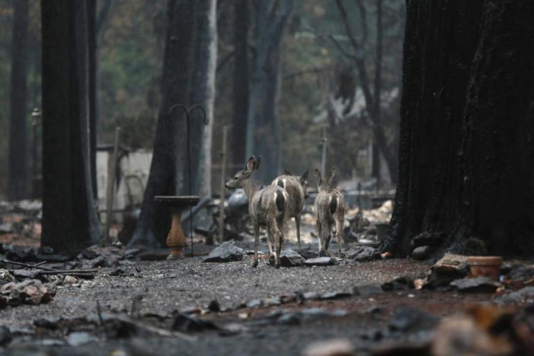 Καλιφόρνια: Αγνοούνται ακόμα 563 άνθρωποι – 86 οι νεκροί από τις φωτιές